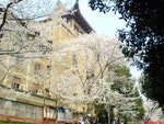 Wuhan University Campus scenery