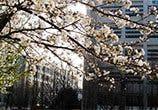 ZJSU Spring
